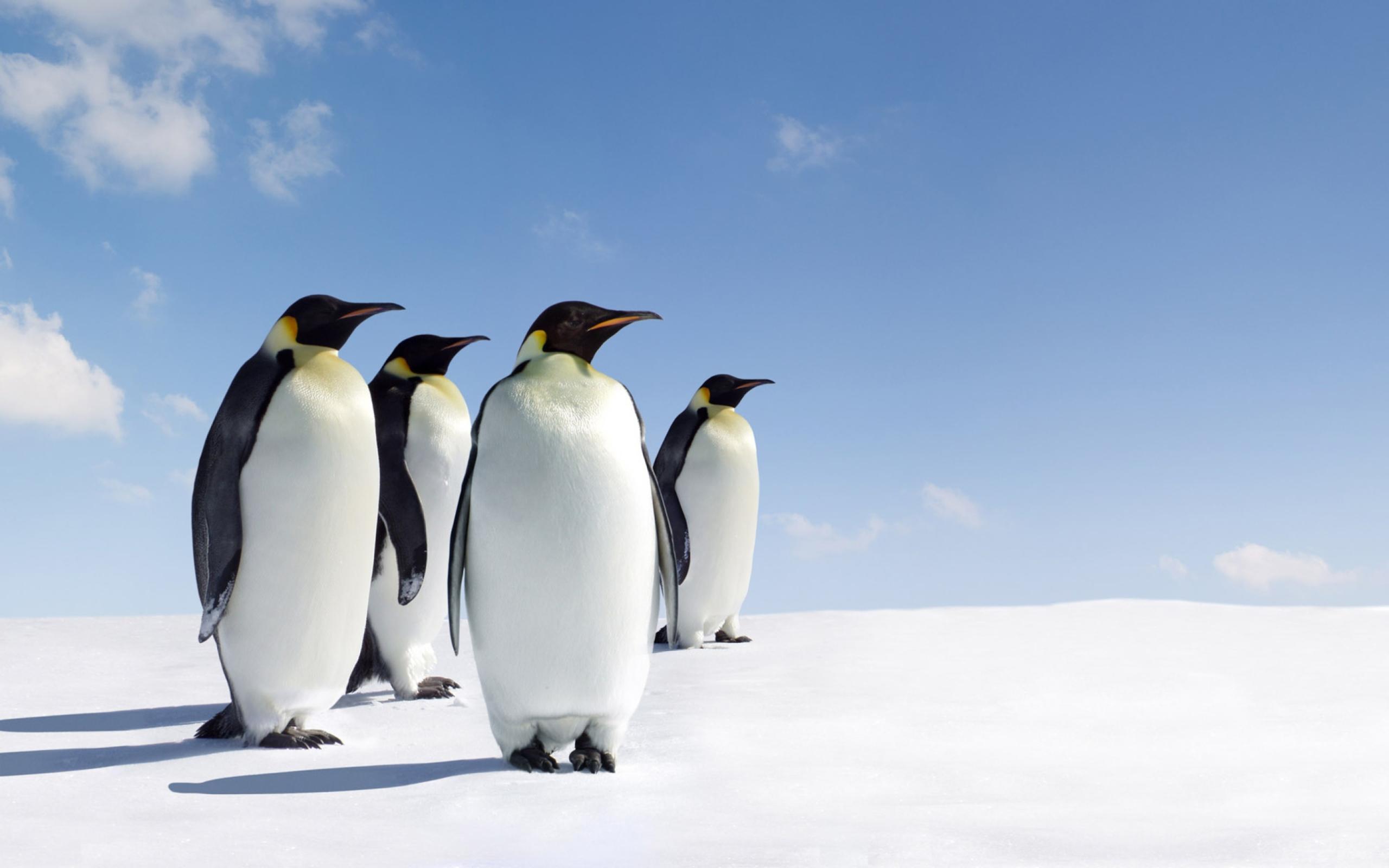 пингвины на глыбе льда  № 91220  скачать