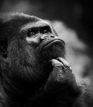 Thoughtful Gorilla - Obrázkek zdarma pro Nokia X2-02