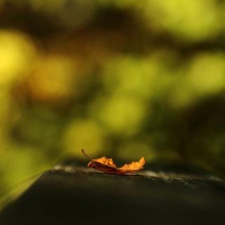 Macro Orange Leaf - Obrázkek zdarma pro 2048x2048