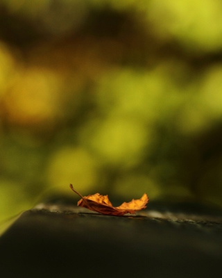Macro Orange Leaf - Obrázkek zdarma pro Nokia Asha 305