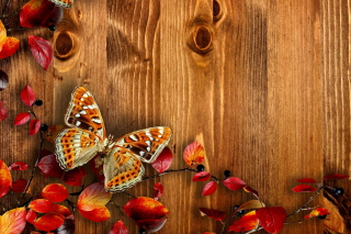 Autumn Background Picture for Android, iPhone and iPad