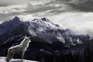 White Wolf In Mountains - Obrázkek zdarma pro Fullscreen Desktop 1280x960