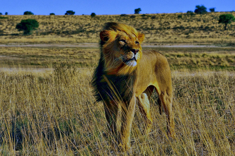 природа животные пустыня  № 3146253  скачать