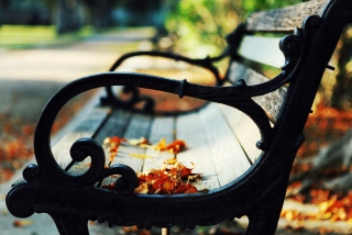 Bench In The Park Background for Android, iPhone and iPad