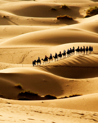Camel Caravan In Desert - Obrázkek zdarma pro Nokia Lumia 610