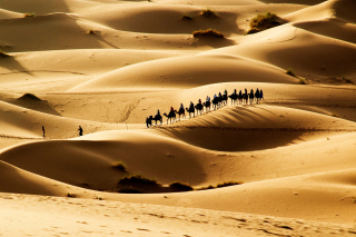 Camel Caravan In Desert Background for Android, iPhone and iPad