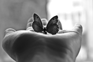 Butterfly In Hand Wallpaper for Android, iPhone and iPad