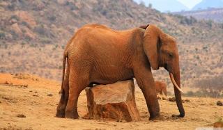 Elephant - Obrázkek zdarma pro Samsung Galaxy S4