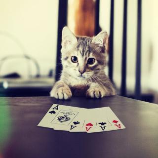 Poker Cat - Obrázkek zdarma pro iPad Air