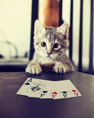 Poker Cat - Obrázkek zdarma pro Nokia X7