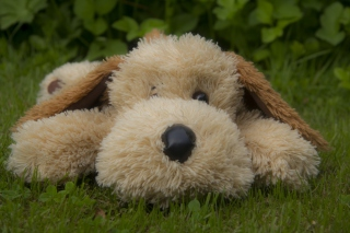 Free Lonely Plush Dog Picture for Android, iPhone and iPad