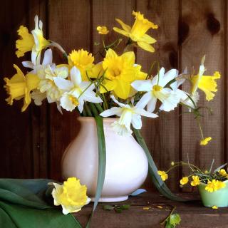 Daffodil Jug - Obrázkek zdarma pro 2048x2048