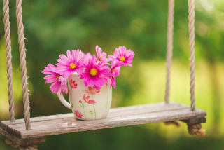 Pink Daisies In Mug Wallpaper for Android, iPhone and iPad