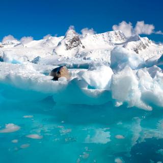 Seal in the Arctic ice - Obrázkek zdarma pro iPad mini