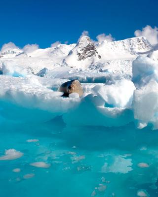 Seal in the Arctic ice - Obrázkek zdarma pro 128x160