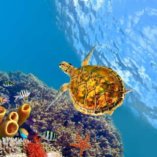 Colorful Underwater World - Obrázkek zdarma pro 2048x2048