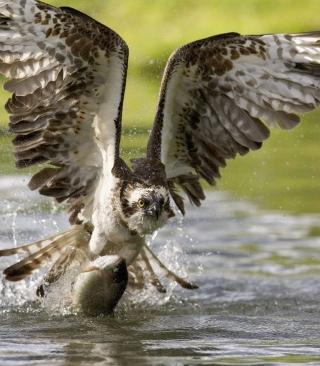 Sea Hawk - Obrázkek zdarma pro iPhone 5C