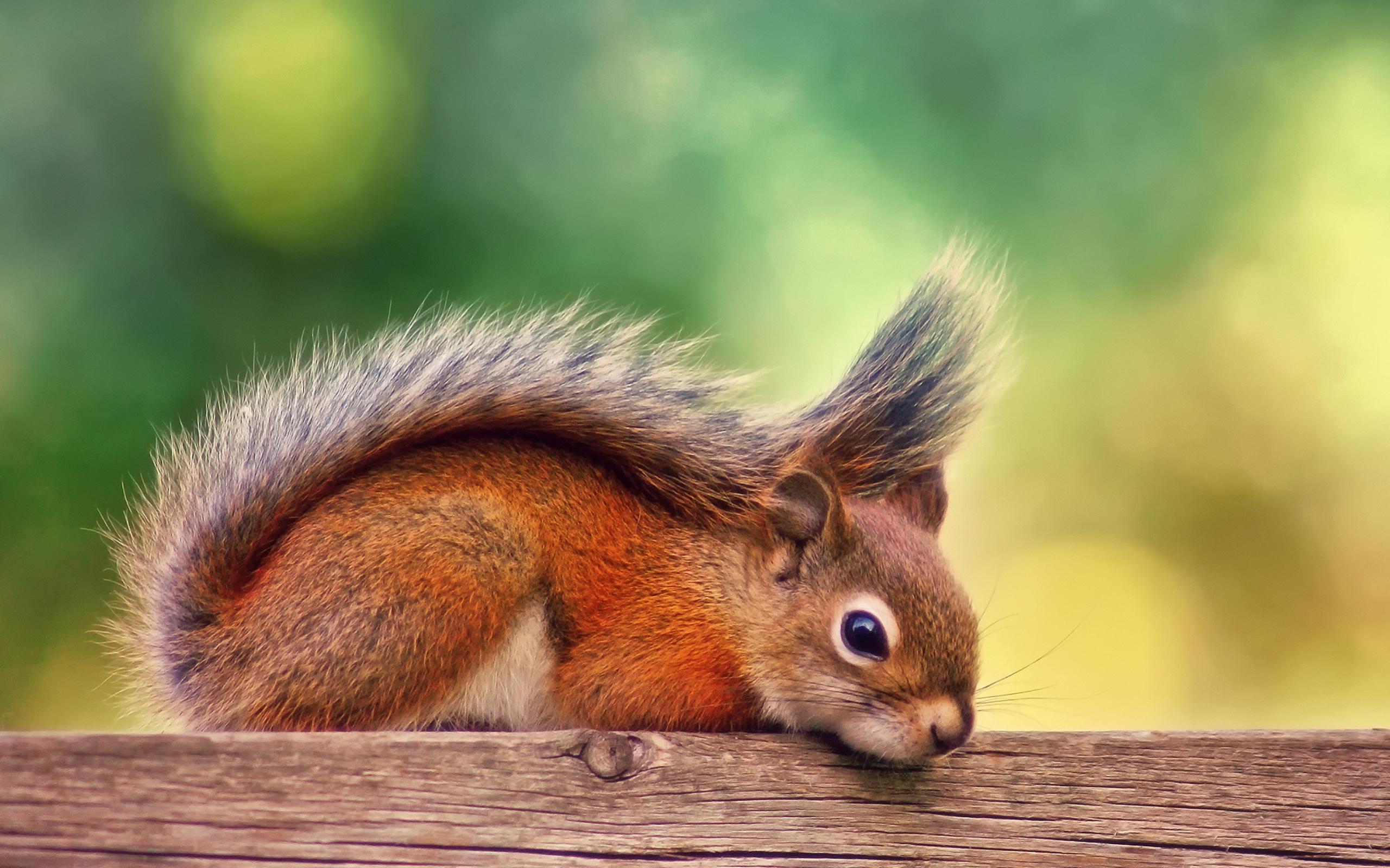 природа осень животное корзина семечки белка  № 2096078 без смс