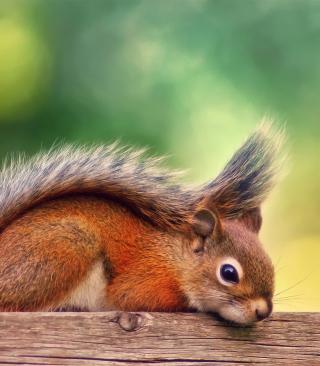Little Squirrel - Obrázkek zdarma pro Nokia Asha 202