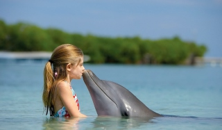 Dolphin's Kiss Background for Android, iPhone and iPad