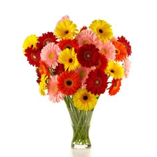 Gerbera Daisy Bouquets - Obrázkek zdarma pro 2048x2048