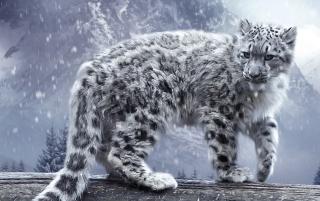 White Leopard - Obrázkek zdarma pro Fullscreen Desktop 1400x1050