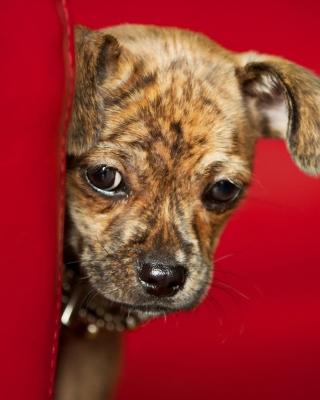 Puppy - Obrázkek zdarma pro Nokia 300 Asha