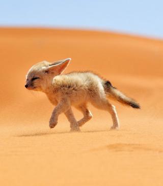 Desert Wolf - Obrázkek zdarma pro Nokia 5800 XpressMusic
