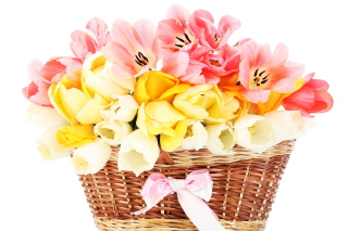 Tulips Basket Background for Android, iPhone and iPad