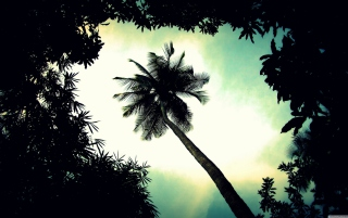 Palm Tree Top Background for Android, iPhone and iPad