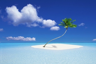 Lonely Palm Tree Background for Android, iPhone and iPad