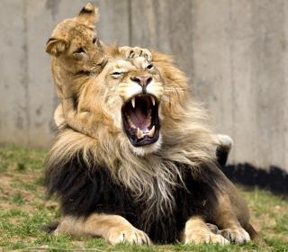 Lion Game - Obrázkek zdarma pro iPad Air