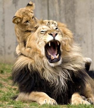 Lion Game - Obrázkek zdarma pro 240x432