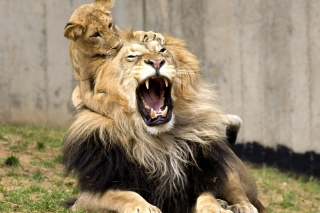 Lion Game - Obrázkek zdarma pro Samsung Galaxy Note 4