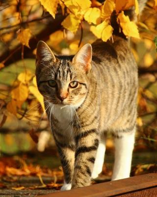 Tabby cat in autumn garden - Obrázkek zdarma pro 360x400