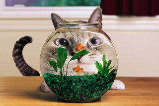 Aquarium Cat Funny Face Distortion Background for Android, iPhone and iPad