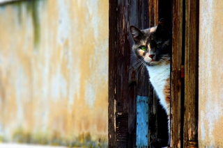 Cat That Is Waiting Picture for Android, iPhone and iPad