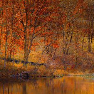 Colorful Autumn Trees near Pond - Obrázkek zdarma pro iPad 2