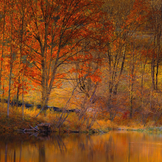 Colorful Autumn Trees near Pond - Obrázkek zdarma pro 2048x2048