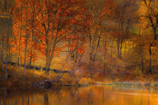 Colorful Autumn Trees near Pond Background for Android, iPhone and iPad
