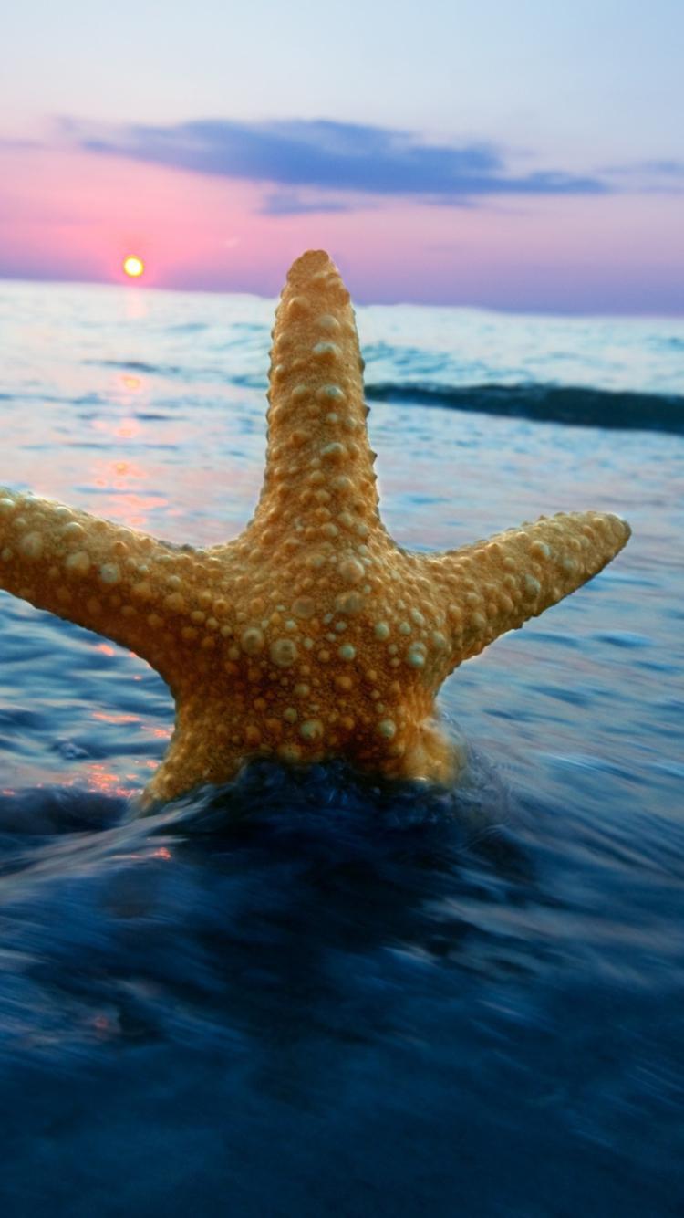 природа горизонт море морская звезда  № 623065 загрузить