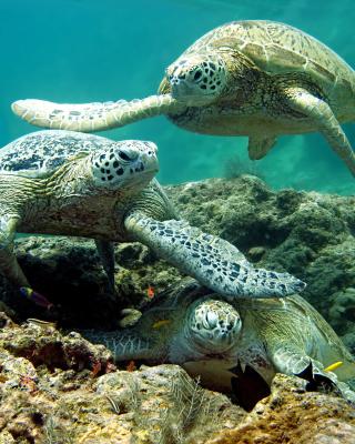 Underwater Sea Turtle HD - Obrázkek zdarma pro Nokia X2