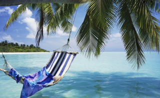 Hammock Under Palm Tree Picture for Android, iPhone and iPad