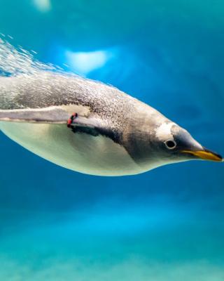 Penguin in Underwater - Obrázkek zdarma pro Nokia C3-01