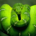 Screenshot №1 pro téma Green Python Snake 128x128