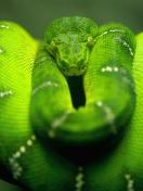 Screenshot №1 pro téma Green Python Snake 132x176