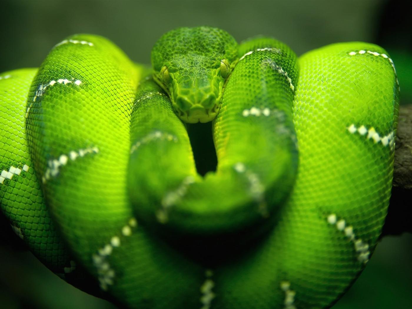 Screenshot №1 pro téma Green Python Snake 1400x1050