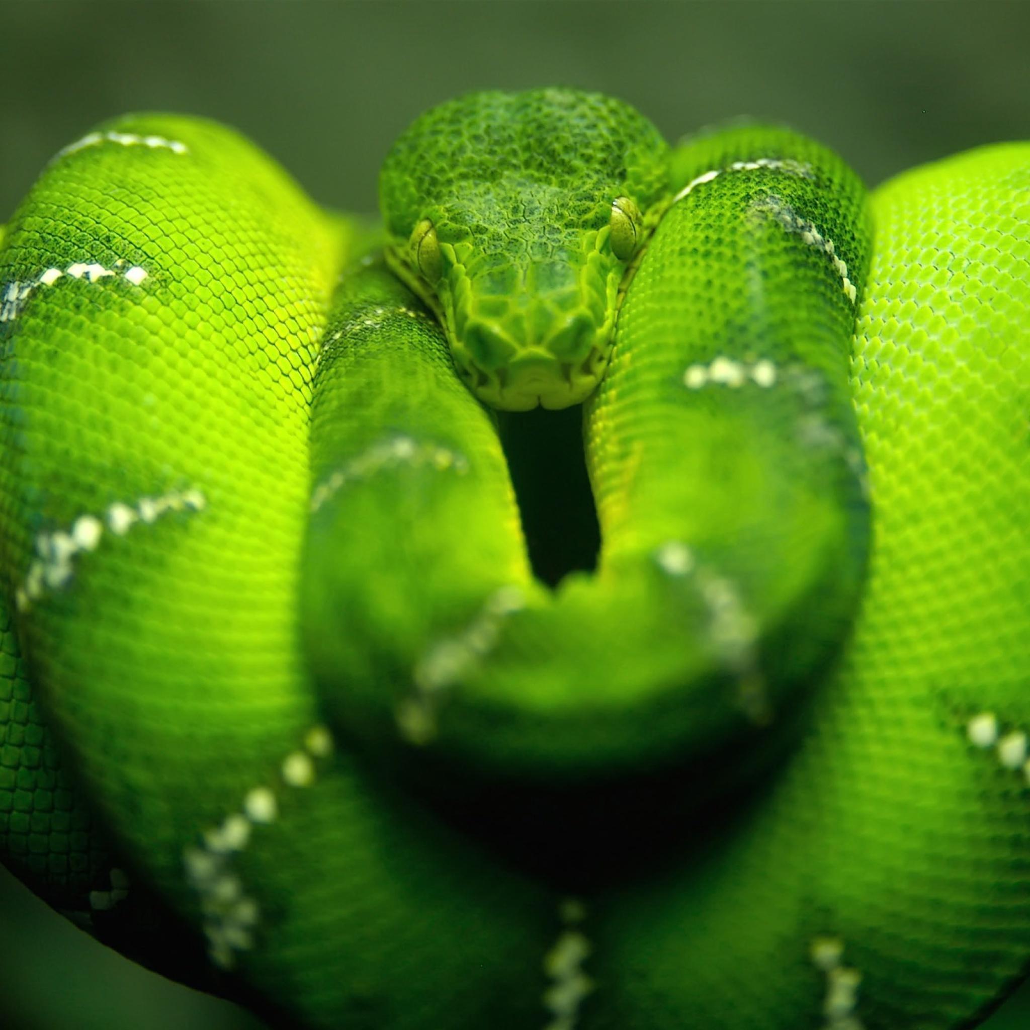 Screenshot №1 pro téma Green Python Snake 2048x2048
