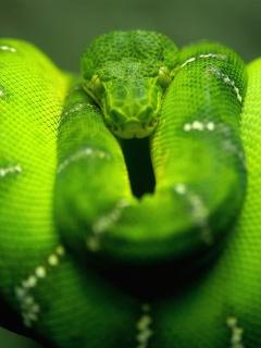 Screenshot №1 pro téma Green Python Snake 240x320