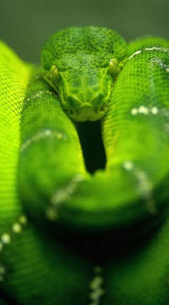 Screenshot №1 pro téma Green Python Snake 240x432